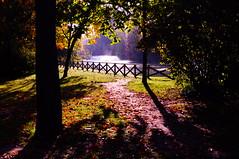 Autumn #15 (gianmi) Tags: autumn light bw italy color art nature leaves foglie blackwhite nikon italia bn bologna luci acqua photoart biancoenero controluce backlighting madeinitaly d90 gianmichele nikond90 gianmi gianmichelepace