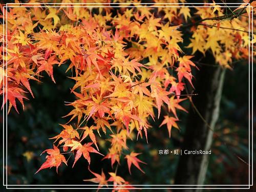 2009-12-11 京都 067 R