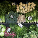 Moltitudine di verdure (Valparaiso)