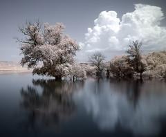 (Sakis Dazanis) Tags: longexposure lake tree landscape ir dam artificial greece macedonia infrared sakis waterscape hoyar72 athanasios kozani 1855kitlens ptolemaida canon450d      eordaia   perdikas      perdikkas   dazanis