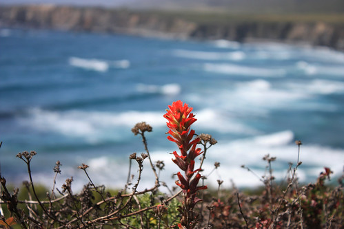 Indian Paintbrush Overlook