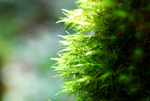蘚苔真的很漂亮