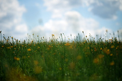 Dandelion Field - Location Scouting (Brandon Christopher Warren) Tags: sky macro green field yellow clouds canon happy weeds bright wide sunny dandelion pasture 70200mm isusm eos5dmarkii