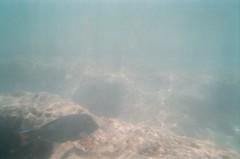 Snorkeling at Hanauma Bay (Teak's Pics) Tags: hawaii snorkeling hanaumabay may2009