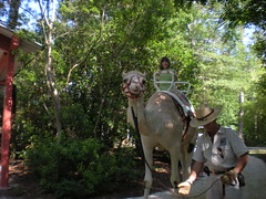 9 - Sophie Riding the Camel