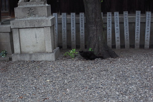 Today's Cat@20090613