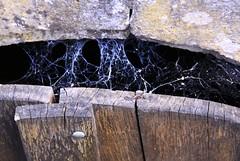 The best way to check, if a door had been opened (:Linda:) Tags: door germany bavaria keller town basement spiderweb franconia cobweb spinne cellar tr spinnwebe rhn storeroom rhoen ostheim grabfeld ostheimvorderrhn storeroomswithdoorsfromoutside