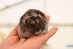 IMG_0450 (Danny Harvey 1) Tags: hamsters uxbridge middlesexshow