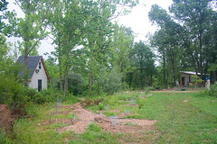 Food forest and cabins