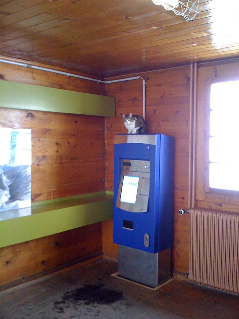 Automate Gryon avec chat