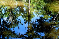 Swamped (StephenReed) Tags: reflection moss louisiana cypresstrees the4elements tchefuncteriver madisonvillela fairviewriversidestatepark