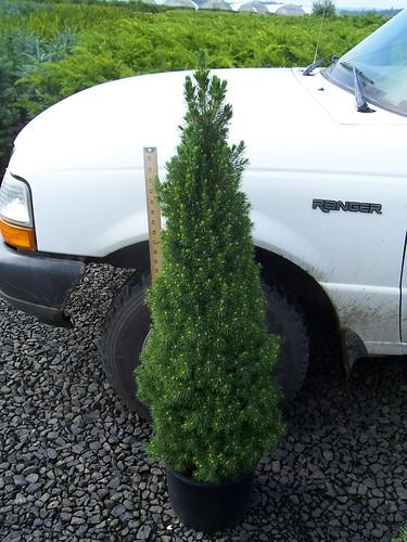 Rhs Plant Finder. Rhs Plant Finder