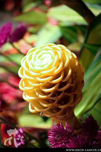 P_flower05