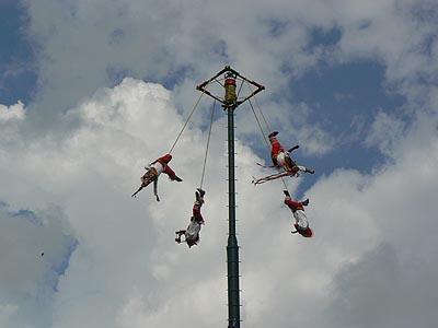 voladores en vol.jpg