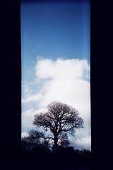 b o o k m a r k (bradley gaskin) Tags: camera city blue sky panorama cloud tree film 35mm iso100 bed all fuji mask superia pano australia panoramic scan plastic busy adelaide fujifilm claude sa now expired mashedpotato botanicgarden cheap nite bookmark expiredfilm asa100 soz fujicolor fujicolorsuperia100 andthatsit asyoucanprobablytell ofaprint expseptember2001 ihaventshotmuchlately ivehadtheplasticpanoinmybag andthelomolca apologiesfortheburstofskinnyphotos ilovehowthisfilmcapturesblues willgetaroundtoansweringemailsetcasap
