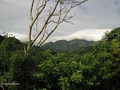 Visayas State University Mountain (Ormokano) Tags: mountain fauna canon landscape flora university view state philippines ixus lsu 80 visayas visca vsu leyte baybay barangay pangasugan teampilipinas ormokano