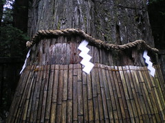 Nostalgia #23 (tt64jp) Tags: history japan forest japanese shrine religion unesco worldheritagesite nostalgia cedar sacred  nikko spiritual shogun shinto  japon sanctuary tochigi   toshogu    sacredtree  tokugawa    shimenawa ieyasu        innershrine  lhistoire globalspirit nikkotoshogushrine