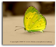 Brake (Saking--Little Busy) Tags: green nature butterfly kingdom stealth soe saqib saking mywinners abigfave anawesomeshot flickrdiamond concordians kingloi stunningwisdom
