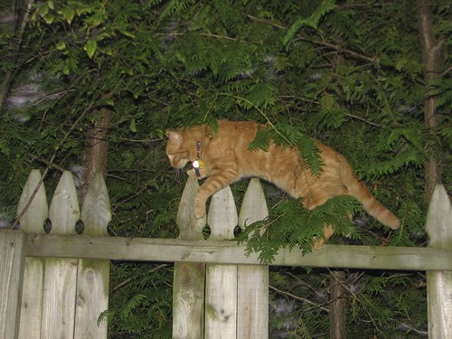 Frances on the fence