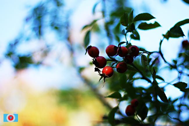 autumn-09