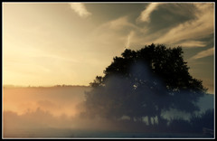 675 Morvan (Nebojsa Mladjenovic) Tags: light sky sunlight mist france tree nature fog digital outdoors lumix burgundy panasonic ciel bourgogne arbre priroda morvan fz50 drvo yonne svetlost topseven mladjenovic