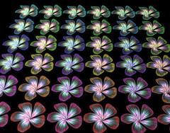 Petals (Fullbright + Glow) 02