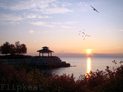 Easy Like A Sunday Morning (flipkeat) Tags: morning lake ontario canada nature birds silhouette port sunrise landscape outdoors awesome sunday flight scenic peaceful swans credit mississauga tranquil avian waterscape portcredit dsch50