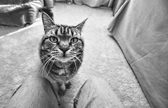 Pet Me......Please! (NjCarGuy) Tags: cat canon sigma enhanced topaz winky adjust sigma1020 femilne