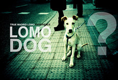 lomo dog (jmavedillo - NTF) Tags: madrid dog lomo lca ad ps anuncio perro question javier martinez cartel advertise lomografia pregunta lomospain avedillo