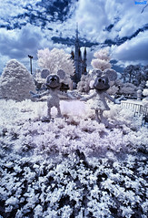 Disney Infrared: Mickey & Minnie Mouse Pose In The Cinderella Castle Rose Garden