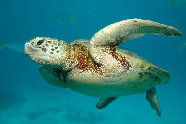 Barier Reef, Australia