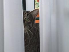sasha bub settete (terevinci) Tags: italy cats rome roma animals cat canon kitten kitty felino hiding gatto gatti animali animale felis carnivoro cuccioli gattini animaledomestico canon570 animalesacro