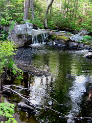 little forest pool (Art and Nature-Mike Sherman) Tags: wild forest photo spring natural photos michigan wildlife photograph upperpeninsula northwoods boreal marquettecounty