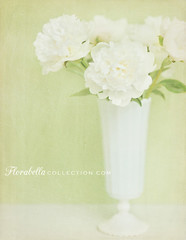 Peonies for Sarah... (Shana Rae {Florabella Collection}) Tags: life flowers light stilllife white green texture glass colors vintage milk still nikon natural 85mm pale vase dreamy peonies testimonial thankyousomuch florabella d700 shanarae florabellatextures sarahjgardner iwasgettingtireofbluebackgrounds