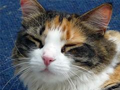 Sun Coma (McDuck17) Tags: friends pet cats animal cat kitty mywinners bestofcats friendsofzeusphoebe