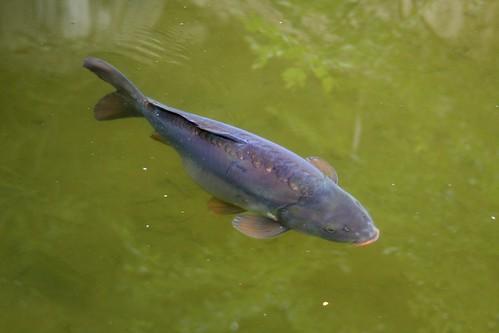 IMG_6851 Fisch