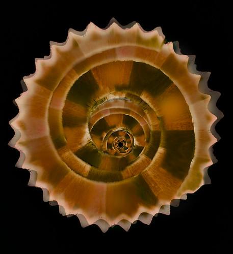 Shaving Spirals
