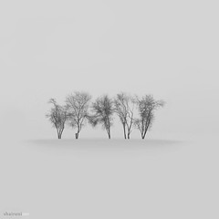 five.trees.of.paradise (Shairani) Tags: road trees pakistan photoshop river grey visions canal paradise dream surreal roadtrip minimalism minimalistic sindh explored interiorsindh ranipur ignoringtheruleofthirds
