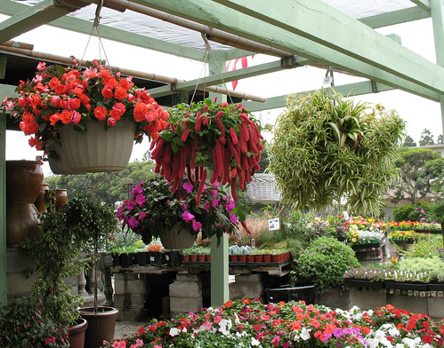 colorful hanging baskets of plants