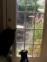 Nope. Where is it. (byrdiegyrl) Tags: black cat garden georgia furry milo watching savannah lizards 2009 badboy