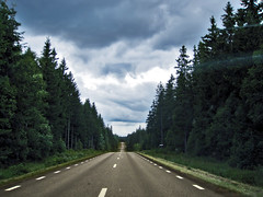 On the road through a Swedish Forest.