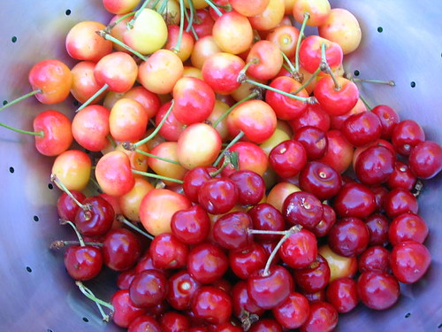 Our Cherries