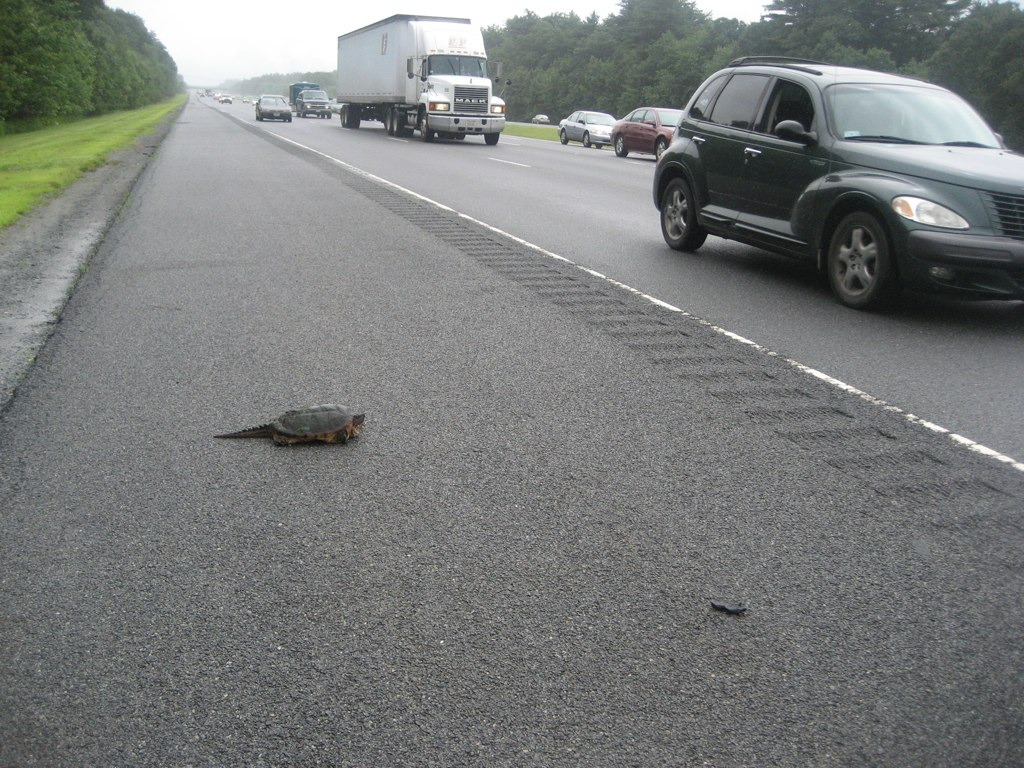 I SAVED A TURTLE FROM DEATH!!!!
