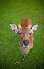 Killer Deer (jauderho) Tags: original japan canon unescoworldheritagesite 日本 5d nara 2007 奈良 1635mm jauderho interestingness110 i500 japan2007