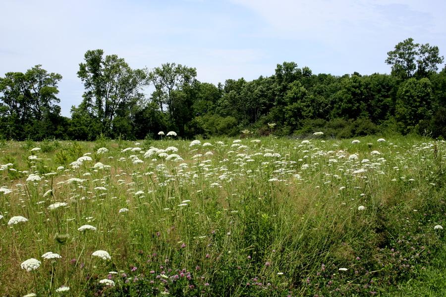 In the field(4)