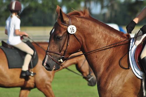 rocking horse 014