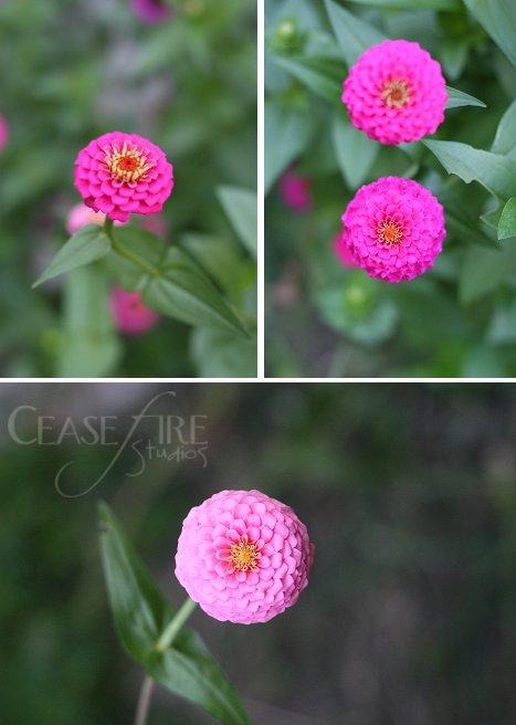 08-24-flowers
