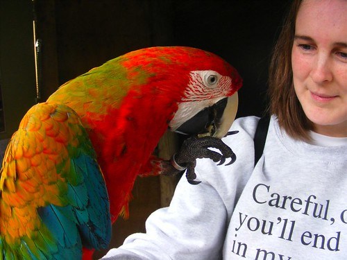 me and parrot