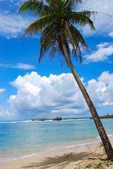 palm tree (nina.jsc) Tags: ocean blue sky tree green beach water island sand paradise surf palm guam guahan 671