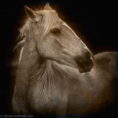 Mindful needs (Dave Arnold Photo) Tags: pictures ranch horse usa mountain newmexico southwest west vintage us photo desert image photos farm arnold picture pic images busstop photograph american western haystack getty navajo nm mesa equine wildhorse oldwest southwesternus navajonation haystackmountain davearnold newmex greatimage canonequipment canonphotographer deserthorse davearnoldphotocom specialshotswelltaken haystackmesa arnoldd